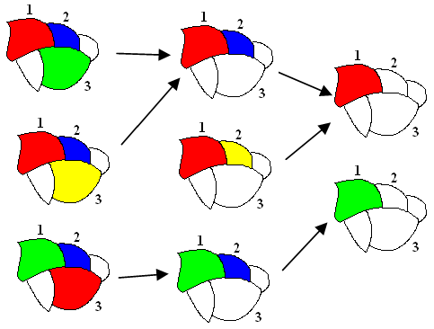 four_colours_more